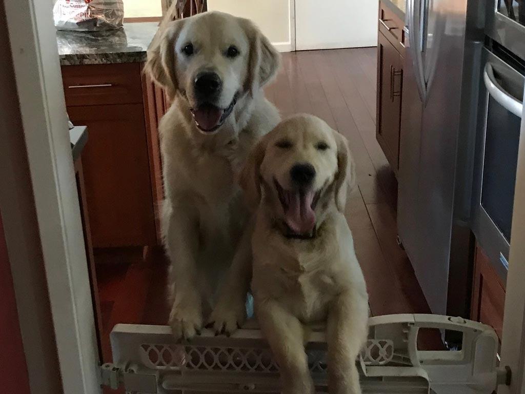Beau & Finn