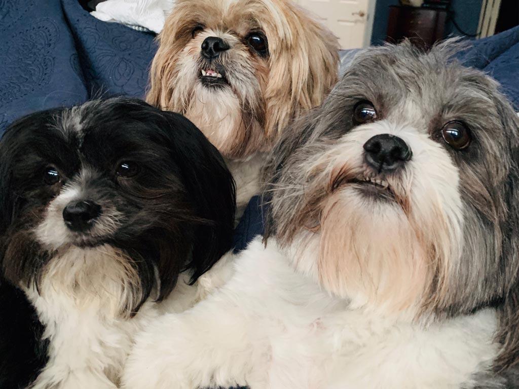 Opra, Bella & Betty Boop