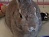 Calan the Bunny